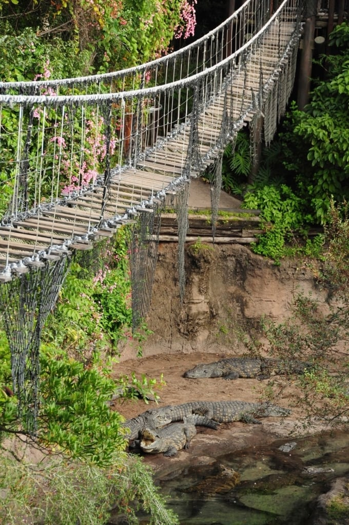 Rope Bridge over the Crocs