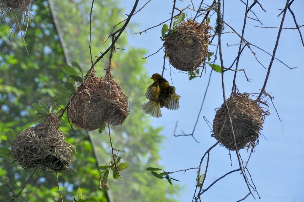 Wild Africa Trek Birds Nest