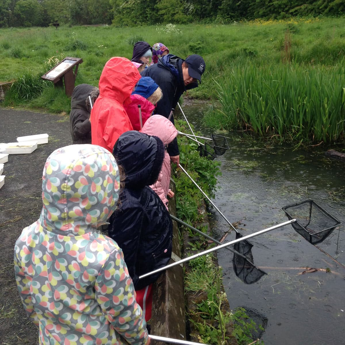 Northumberland Wildlife Trust Pond Dipping
