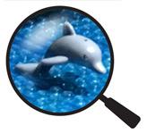 Not so Hidden Lego Dolphin