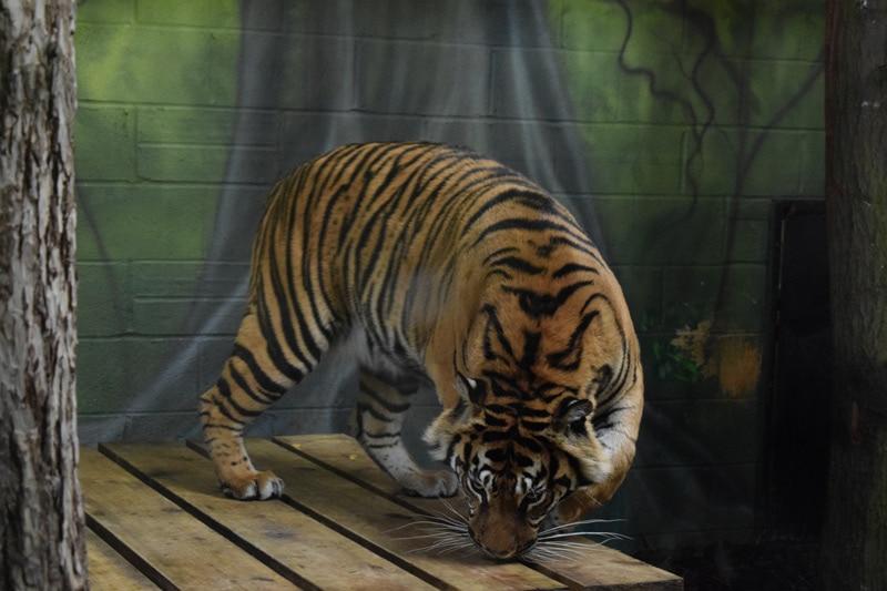 Drayton Manor Zoo
