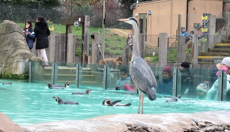 London Zoo Animals