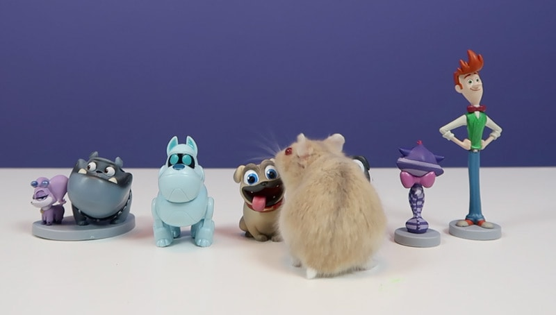 Nibbles and Puppy Dog Pals