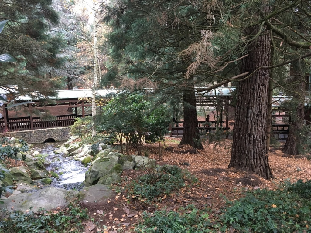Sequoia Lodge Grounds