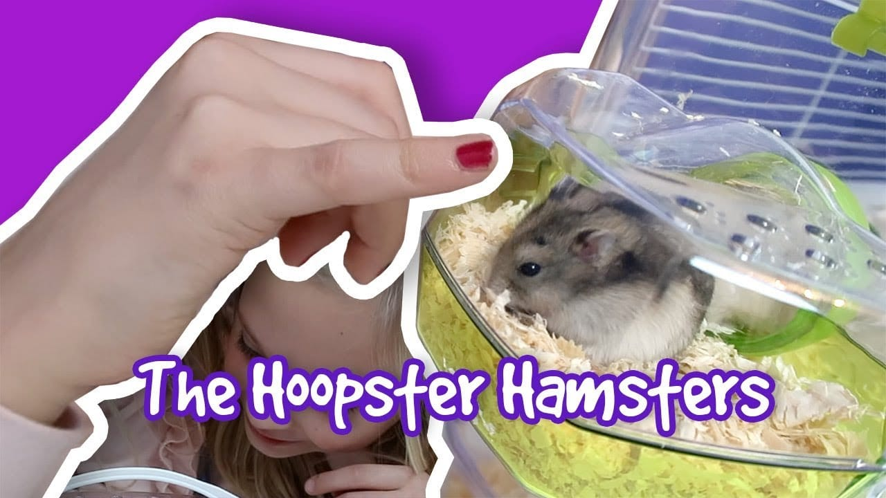 Setting Up A Hamster Cage Amp Keeping Dwarf Hamsters