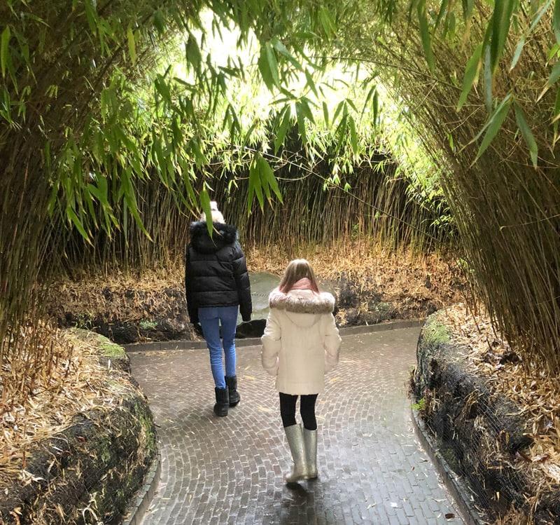 Alnwick Garden Winter activities